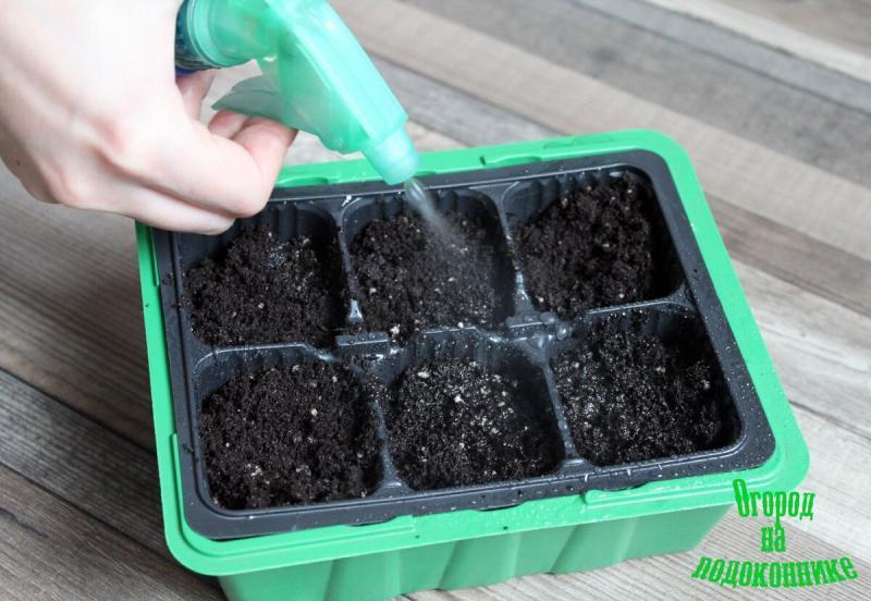 Как сеять томаты на рассаду
