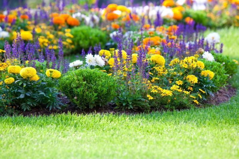 Несколько грамотных советов по исправлению цветника