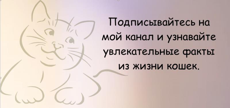 Лайфхаки для хозяев кошек