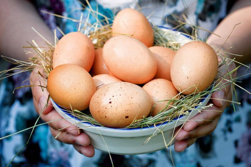 Источники белка для вегетерианцев