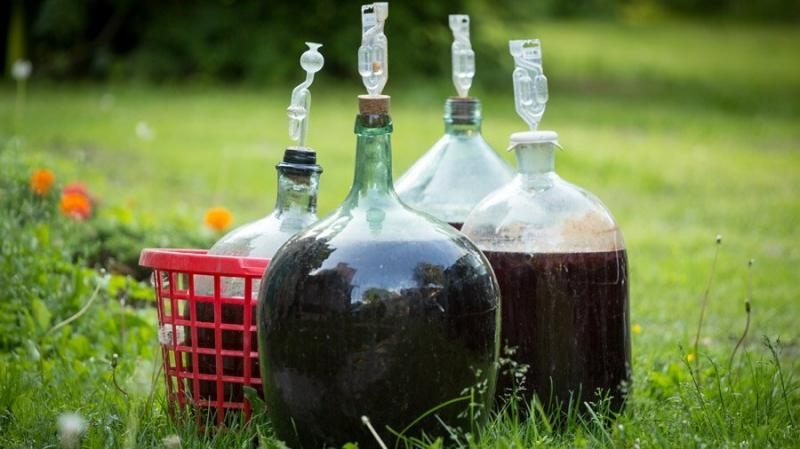 Без Чего Не Получится Вкусное Домашнее Вино