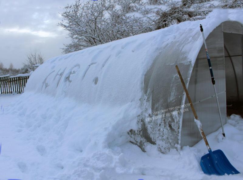 Расчистка теплиц от снега: опасность, о которой не подозревают