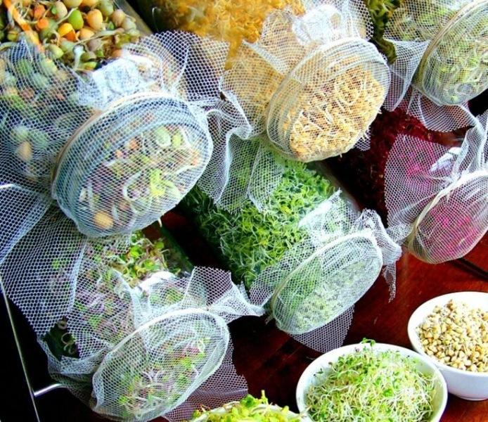 Микрозелень – самый доступный суперфуд: рассказывает эксперт